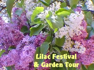 wrightwood lilac festival and garden tour photo tour